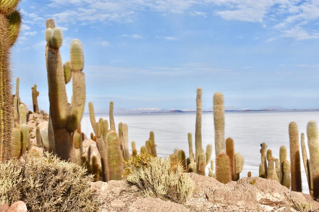 fullsizeoutput_1479ats Cactus Island